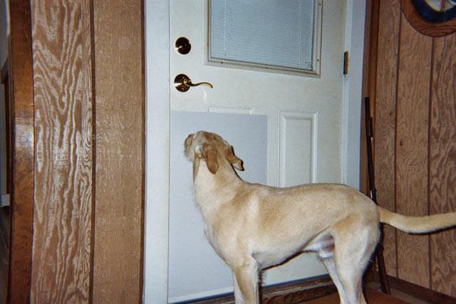 & What are Door Shields?