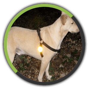 Leash Reflectors are an inexpensive way to help be seen at night.